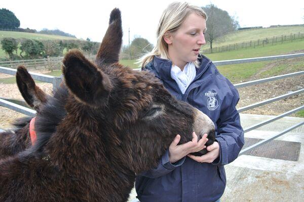 CAV Donkey Sanctuary 3