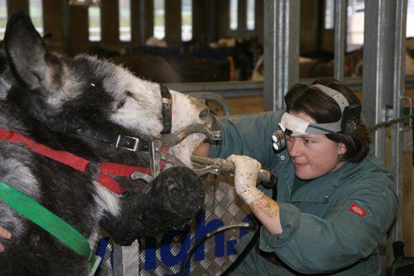 CAV Donkey Sanctuary 5