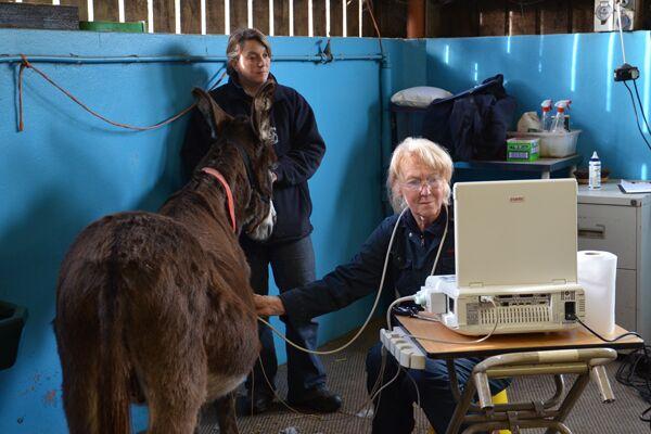 CAV Donkey Sanctuary 6