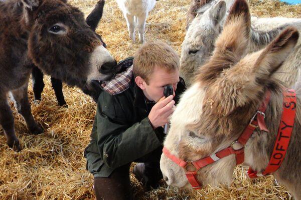 CAV Donkey Sanctuary 7