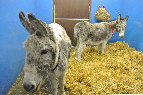 CAV Donkey Sanctuary 8
