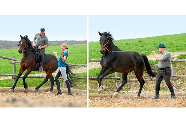 CAV Dressur Horsemanship 10