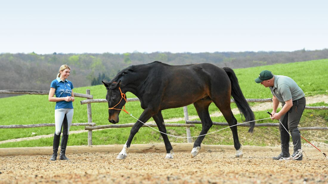 CAV Dressur Horsemanship 3