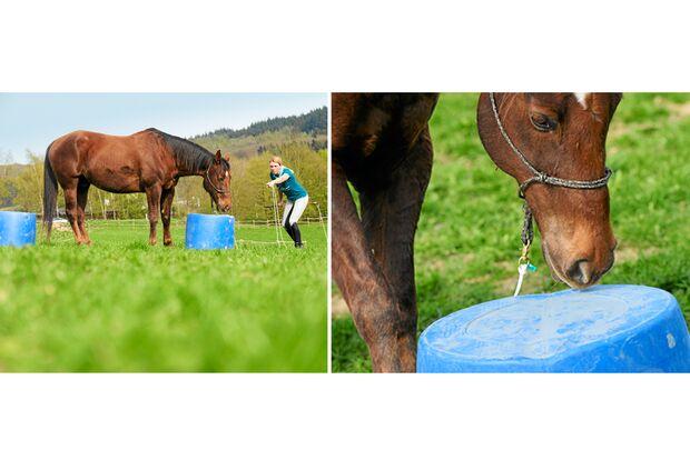 CAV Dressur Horsemanship 6