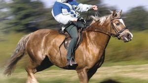 CAV Durchgehen Gelände Sturz Pony Reithelm