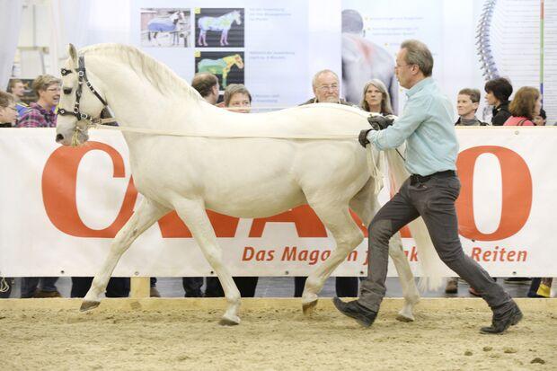 CAV Equitana 2015 Thomas Ritter