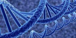 CAV Erbkrankheiten Pferd DNA