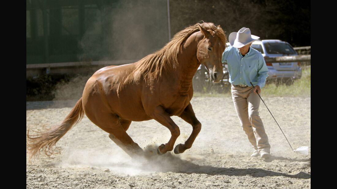 CAV Ernst-Peter Frey Sugarman Horsemanship 02
