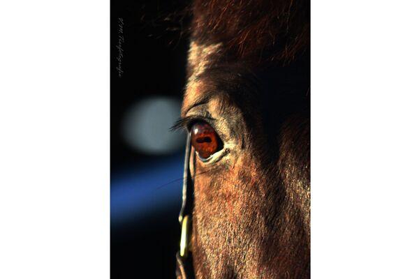 CAV Fan-Pferde 2013 Leserfotos Scally