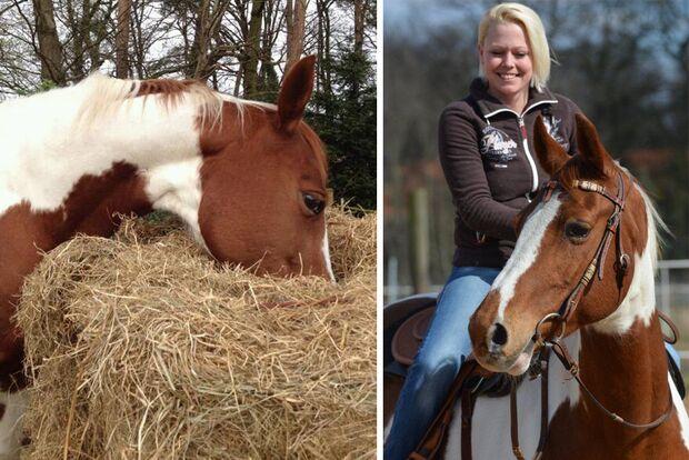 CAV Fan-Pferde Cheyenne Julia Schneider