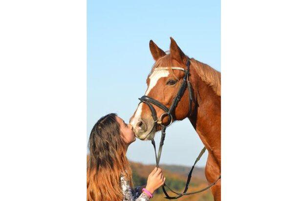 CAV Fan-Pferde Daccord Sabine