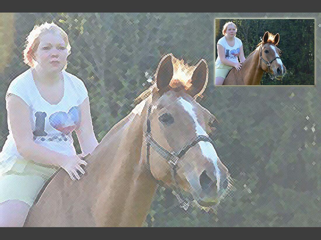 CAV Fan-Pferde Fee Charlyn