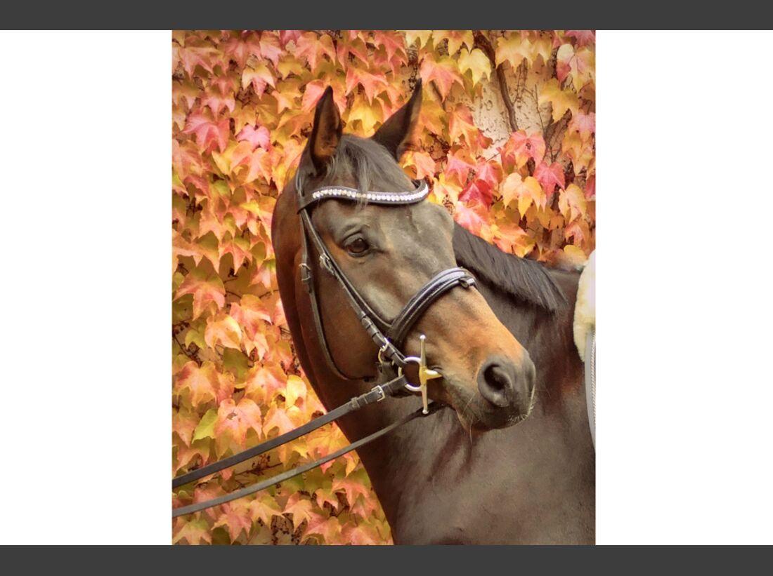 CAV Fan-Pferde Huckleberry Finn Nicole