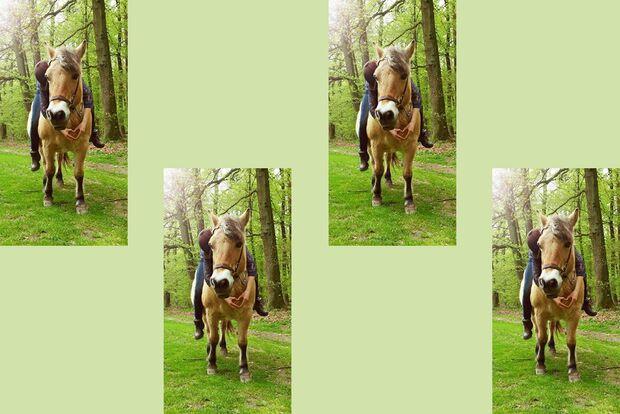 CAV Fan-Pferde Lady Sarah Meyer