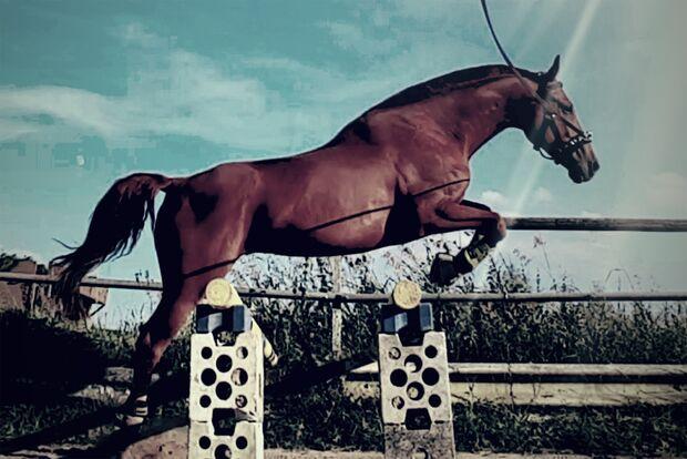 CAV Fan-Pferde Laros Lett Yasmin Philippi
