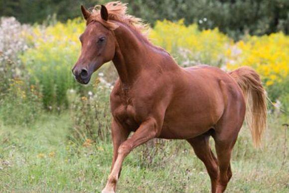 CAV-Fan-Pferde-Leseraktion-2013-Aaliya (jpg)
