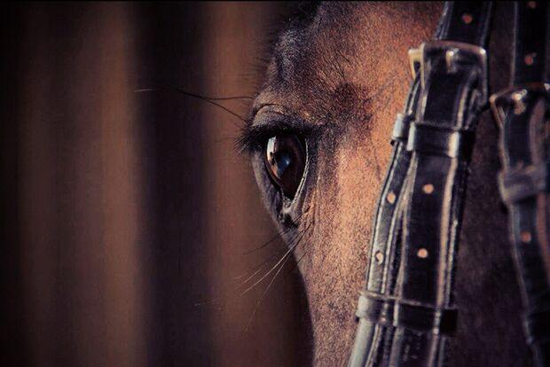 CAV-Fan-Pferde-Leseraktion-2013-Amigo (jpg)