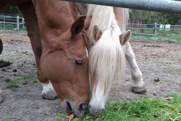 CAV-Fan-Pferde-Leseraktion-2013-Benard_Senia (jpg)