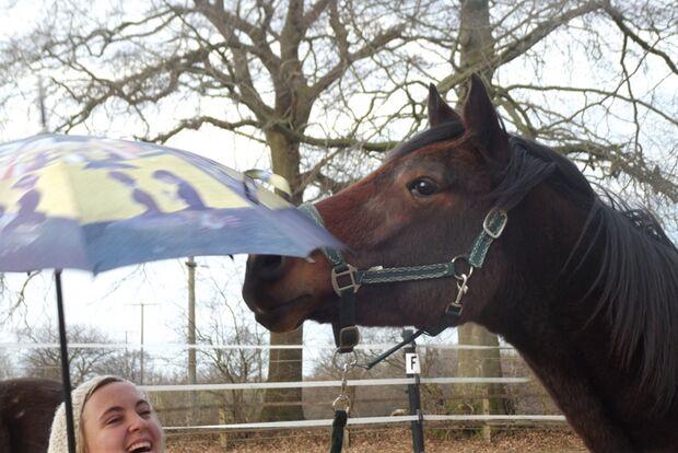 CAV-Fan-Pferde-Leseraktion-2013-Biller_fanpferd (jpg)
