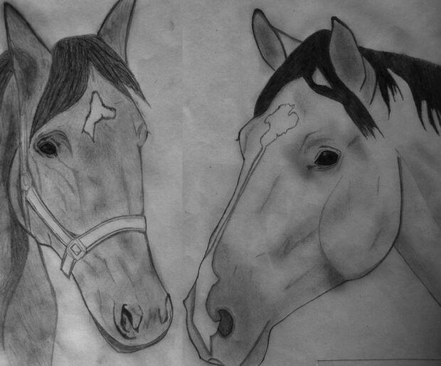 CAV-Fan-Pferde-Leseraktion-2013-Cheggi (jpg)
