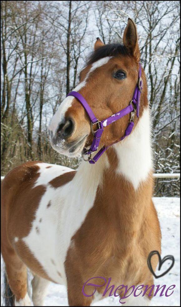 CAV-Fan-Pferde-Leseraktion-2013-Cheyenne_Nina (jpg)