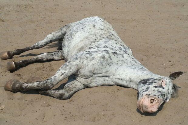 CAV-Fan-Pferde-Leseraktion-2013-Cheyenne (jpg)