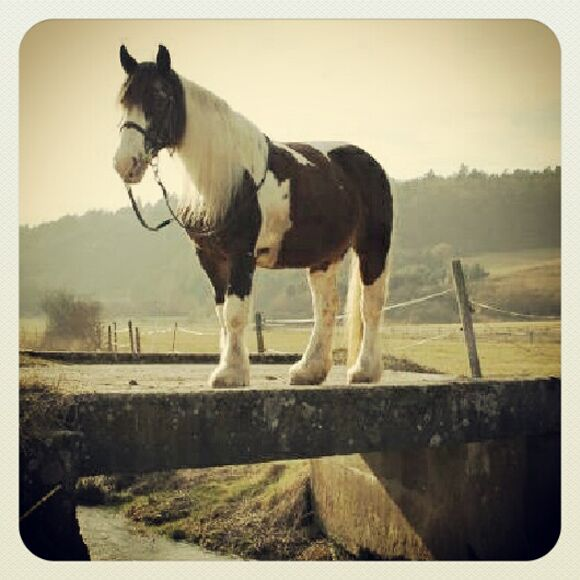 CAV-Fan-Pferde-Leseraktion-2013-Darcy (jpg)