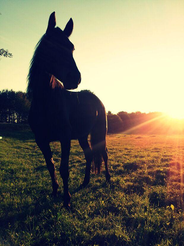 CAV-Fan-Pferde-Leseraktion-2013-Demena (jpg)