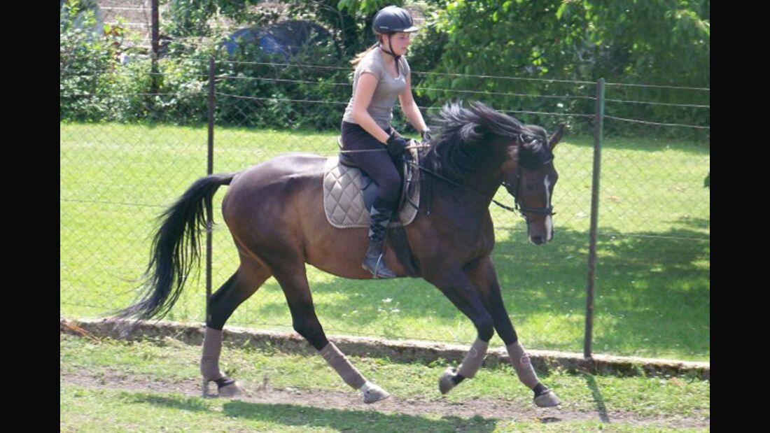 CAV-Fan-Pferde-Leseraktion-2013-Kathrin (jpg)
