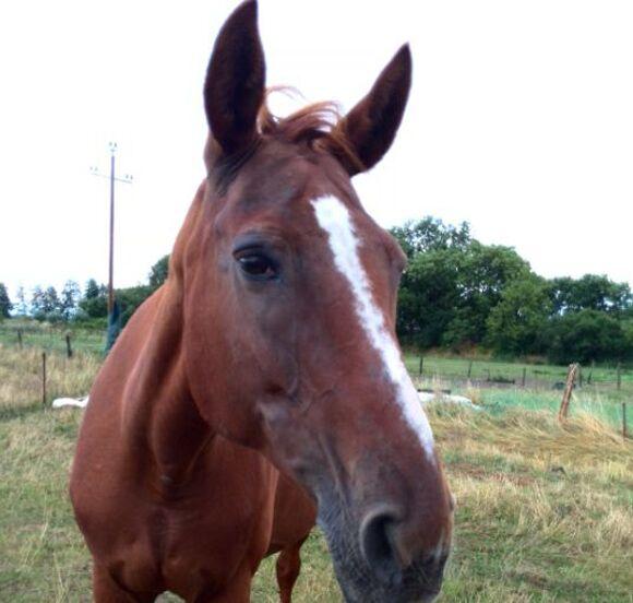 CAV-Fan-Pferde-Leseraktion-2013-Kentucky (jpg)