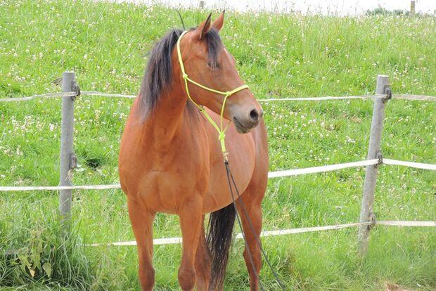CAV-Fan-Pferde-Leseraktion-2013-Maggie (JPG)