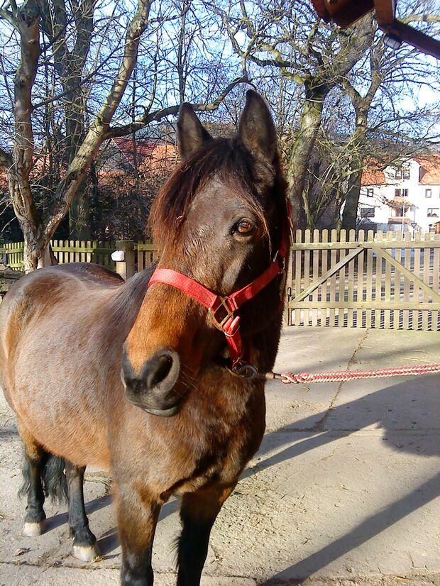 CAV-Fan-Pferde-Leseraktion-2013-Mardorf_Mino (jpg)