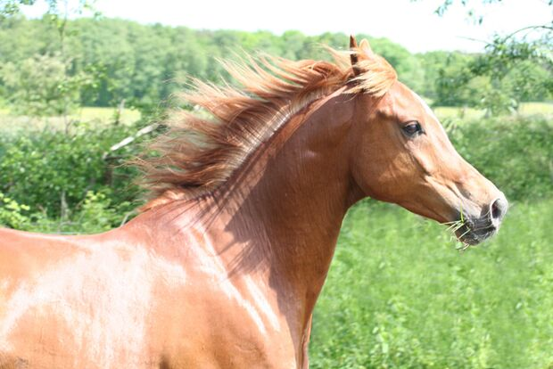 CAV-Fan-Pferde-Leseraktion-2013-Masari (jpg)