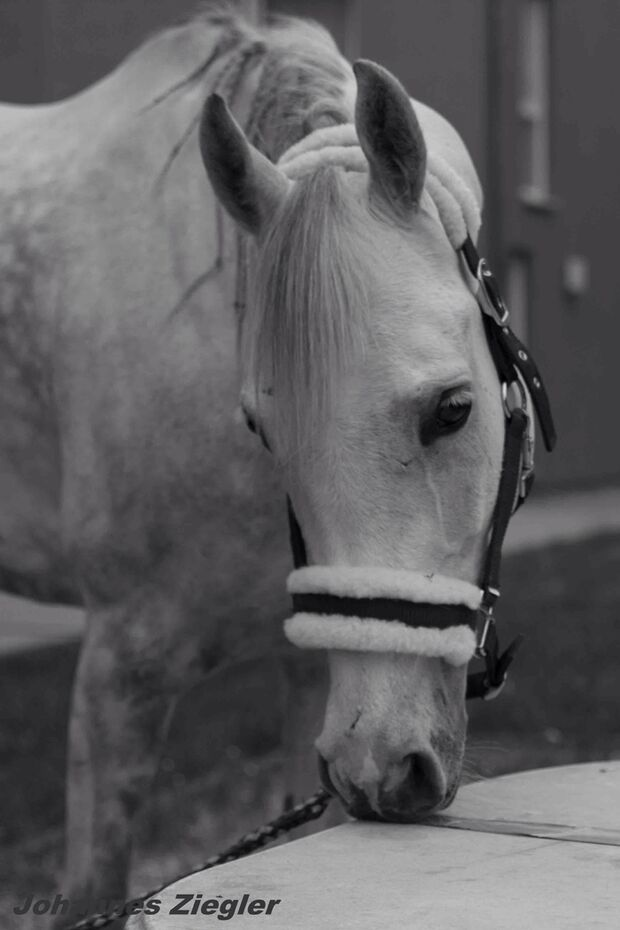 CAV-Fan-Pferde-Leseraktion-2013-Melissa (jpg)