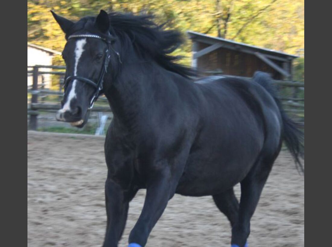 CAV-Fan-Pferde-Leseraktion-2013-Pyrette (jpg)