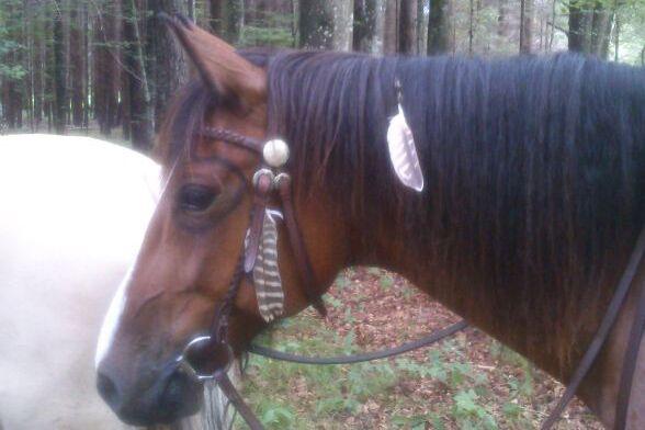 CAV-Fan-Pferde-Leseraktion-2013-Samurei (jpg)