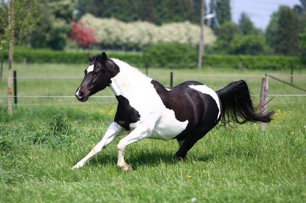 CAV-Fan-Pferde-Leseraktion-2013-Shetana (jpg)