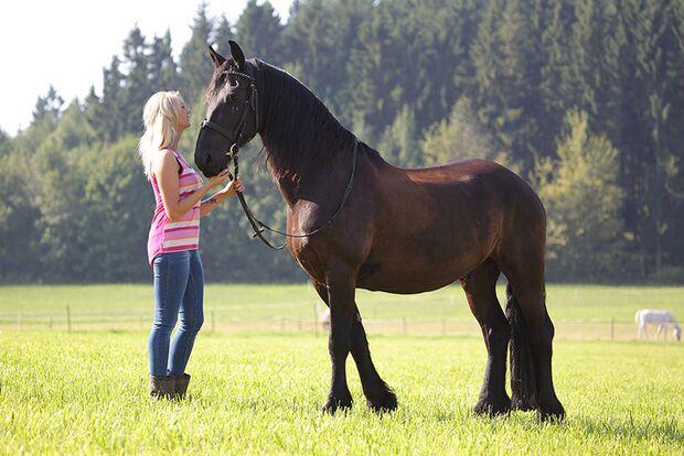 CAV-Fan-Pferde-Leseraktion-2013-Sir-Hendrick (jpg)