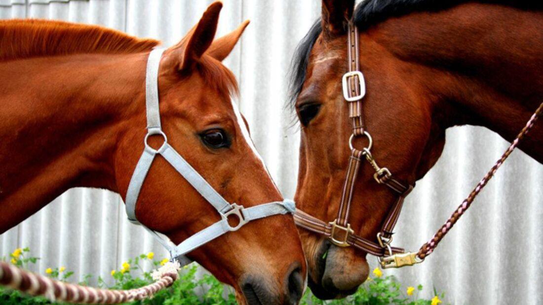 CAV-Fan-Pferde-Leseraktion-2013-Tiziano (jpg)