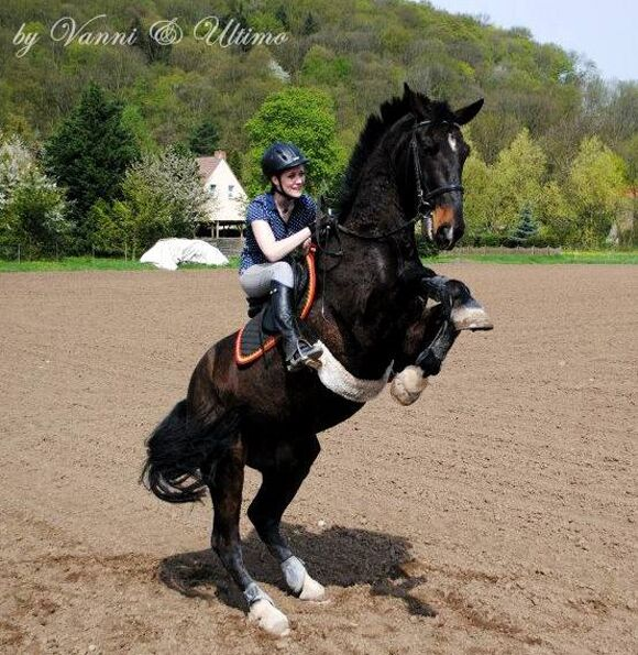 CAV-Fan-Pferde-Leseraktion-2013-Ultimo & Vanessa (jpg)