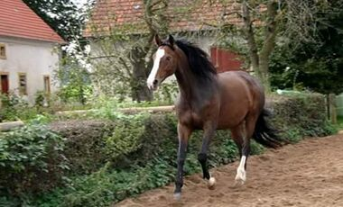 CAV Fan-Pferde Lisalotta - Nicole Pien
