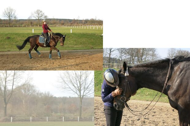 CAV Fan-Pferde Loreley Catherine Leichsenrin