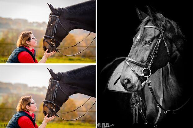 CAV Fan-Pferde Reni Nicolle Marten