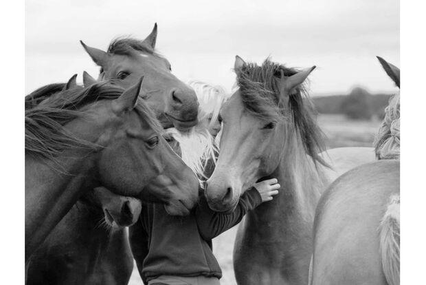 CAV Fan-Pferde Sam Anne Klusmann