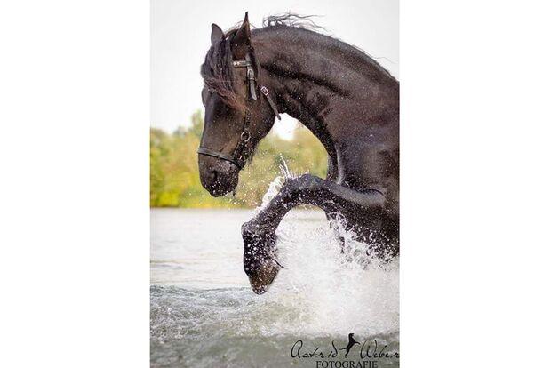 CAV Fotowettbewerb BR Pferde baden Amelie Pausch