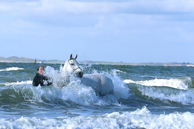 CAV Fotowettbewerb BR Pferde baden Anja Jennessen