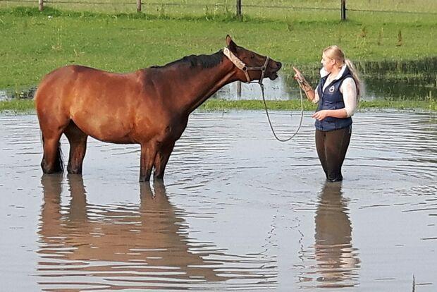 CAV Fotowettbewerb BR Pferde baden Anja Kohnen