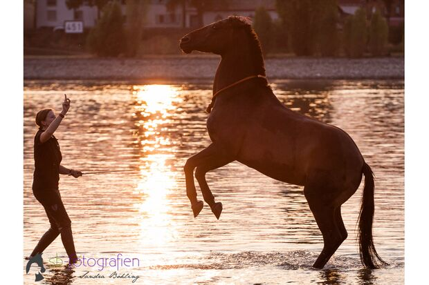 CAV Fotowettbewerb BR Pferde baden Anja Rudolf
