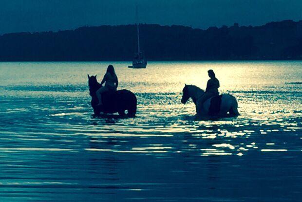 CAV Fotowettbewerb BR Pferde baden Cathrin Kusche