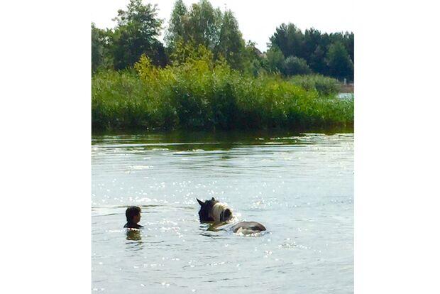 CAV Fotowettbewerb BR Pferde baden Claudia Hübscher
